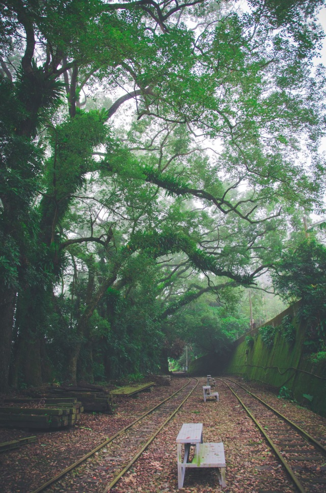 Forest by Zhangnaoliao Station (provided by Lai Guo-Hua)